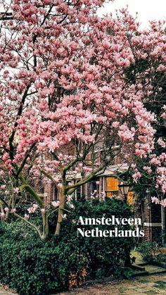 Amstelveen , Netherlands