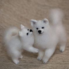 A couple of white siberian huskies