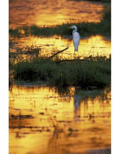 egret? and sunrise