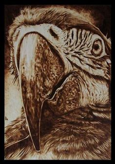 """Parrot"" – pyrography on wood"