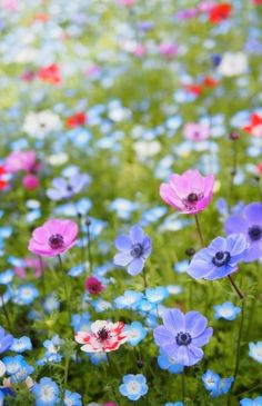 wildflowers...bring them on announcing spring is finally here!!!