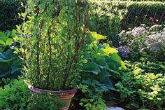 33 Inspiring DIY Trellis Ideas For Growing Climbing Plants - The Self-Sufficient Living Pea Trellis, Garden Trellis, Garden Pots, Balcony Gardening, Veg Garden, Flower Gardening, Green Garden, Edible Garden, Garden Structures
