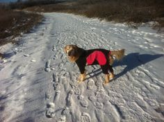 The sun can be shining, but the old hips do feel the cold when unprotected! www.practicaldog.ca