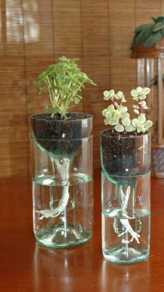 Bottle plants - going to try plastic even though this is glass.