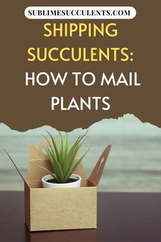 Shipping succulents and cacti may seem like a risky venture, but with proper packing techniques, you can ensure your plants' survival. Read on and find out some tips about how to mail succulent plants properly. #succulents #succulentgardening #succulentshipping Succulent Care, Succulent Gardening, Cacti And Succulents, Planting Succulents, Potted Plants, Cactus Plants, Plant Pots, Packing Technique, The More You Know