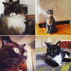 #happynewyear from a few of our #kitty friends from 2015. We can't wait to see what 2016 brings! #catsitting #catsitter #meow #cambma #cambridgema #somervillema #somerville #belmont #belmontma #arlingtonma #arlington #petsitting #petsitter #catsofinsta #catsofig #catsofinstagram #petsofig #petsofinsta #petsofinstagram #kittiesofig #kittiesofinsta #kittiesofinstagram #ilovemyjob by thoughtfulpaws December 31 2015 at 04:44PM
