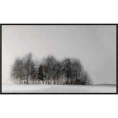 "Global Gallery 'Winter Forest' by Gilbert Claes Framed Photographic Print Size: 17.7"" H x 30"" W x 1.5"" D"
