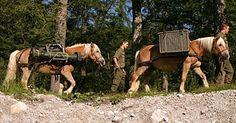 Austria, Warriors, Military, Horses, Animals, Soldiers, Animales, Animaux, Animal