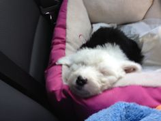 Molly coming home.