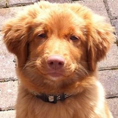 Puppy Nsdtr