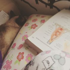 Enquanto uns estudam anato outros dormem profundamente. Não aguento mais ler sobre essa tal de faringe. Queria estar dormindo igual a Laila. #instasqd #justnormalphotos #blogsdaliga #anatomiahumana #gatos #amogatos #catandbook