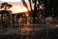 Field of Light Avenue of Honour, Bruce Munro, Albany, Photo / Mark Pickthall Beautiful Lights, Beautiful Places, Albany Western Australia, Anzac Day, Australia Day, After Dark, Need To Know, Color Change, Trip Advisor