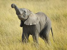 What happens when people suffer from identity crisis? http://www.sufi-stories.com/the-baby-elephant