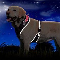 EXPAWLORER Soft Mesh LED Flashing Dog Harness Adjustable Black S *** Continue to the product at the image link.