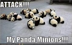 ADORABLE. Pandas would never attack, they are too cute. Ok, so they probably would, but these ones won't. OOH! TOO CUTE!