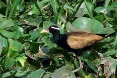 SAVE THESE BIRDS AND THE WATERLAND AND AID TO RESTORE THE BIODIVERSITY OF OUR MOTHER EARTH
