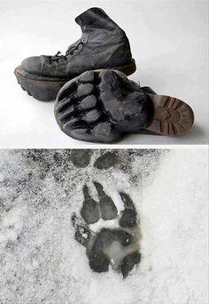 Sneaky bear paw prints!
