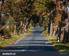 A scenic autumn road between trees in Europe, region Kaliningrad, Russia