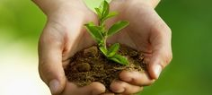 I will transform and organize organic in terriccio!- Trasformare i rifiuti organici in terriccio! When a desperate night of love … I am the land of your roots … - Organic Gardening, Gardening Tips, Organic Farming, Le Cv, Tree Care, Organic Matter, Garden Soil, Children With Autism, Types Of Plants