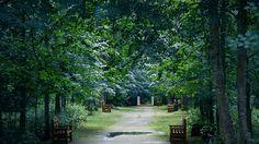 beautiful rest trees garden wallpaper free hd size