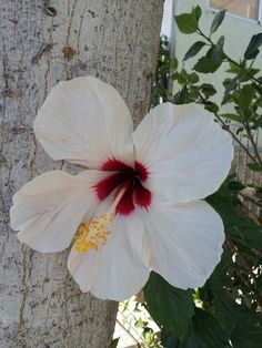 Spanish flower!