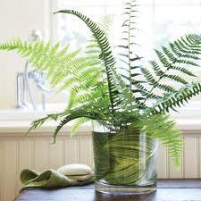 Plant for bathroom