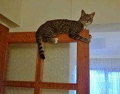 Is my cat defective?
