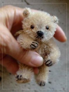 A Tiny Teddy Bear