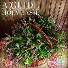 How to Grow and Enjoy the Medicine of Holy Basil {Tulsi} // Blog Castanea