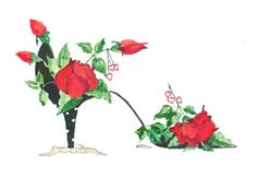 ACEO  Print Can't Help Falling In Love Rose by brownleeartstudio, $4.95 Collector trading card size prints  - signed
