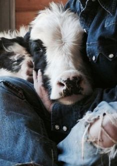 α dαírч fαrm #dairy#farm#country#cow