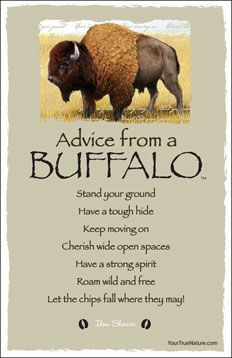 Advice from a Buffalo - Frameable Art Postcard