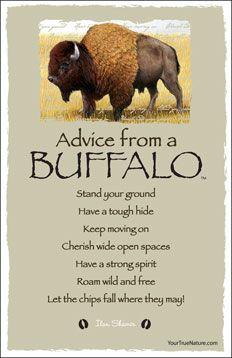 Advice from a Buffalo