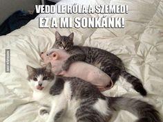 Nemkutya.com - Irigy macskák