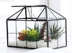 This is a house shape geometric terrarium, with swing lid. It is great for centerpiece on your table. It is also ideal for raising moss, fern or reptiles, insects. Glass Terrarium, Succulent Terrarium, Planter Boxes, Planters, Indoor Greenhouse, Plant Box, Air Plants, Planting Succulents, Outdoor Gardens