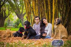 Pregnant Couple Was Told To Get Rid Of Their Dogs, Their Response? A Maternity Photoshoot With Dogs! Animal Shelters Near Me, Pugs, Pregnant Couple, Pregnant Lady, Up Dog, Big Dogs, Dog Photos, Pregnancy Photos, Dog Love