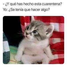 Top Memes, Best Memes, Friends Show, Friends In Love, Funny Spanish Memes, Funny Memes, Drama Memes, Disney Diy, Happy Animals