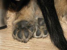 """Paws <3 (Skyeluck Bull`s Eye """"Bubi"""")"""