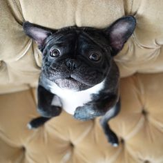 Why r u giggling? What's so funny? #UpsidedownTuesday by bennythefrenchienyc http://ift.tt/1u5TnYe