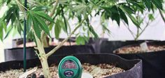 U.S. Government Clears Way For Medical Marijuana Research (PTSD, post traumatic stress disorder)  03/2014