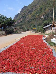 Chillies drying on the road in Nong Khaiw, Northern Laos