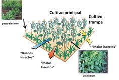 Productos que protegen cultivos Mediante el programa Agrovida, la empresa Bayer busca promueve en Venezuela, el uso adecuado de los productos para protección de cultivos   Twittear  http://wp.me/p6HjOv-2Gw ConstruyenPais.com