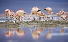 choose your magic travel: Laguna Colorado, Bolivia