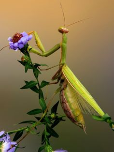 Green praying mantis by Snezana Petrovic on 500px