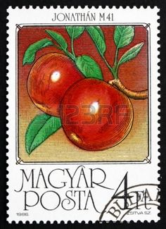 HUNGARY - CIRCA 1986: a stamp printed in the Hungary shows Apples, Malus Domestica, Fruit of the Apple Tree, circa 1986