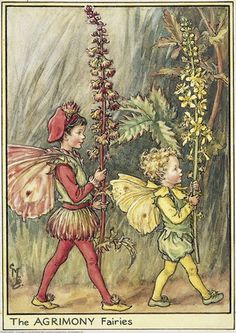 Illustration for the Agrimony Fairies from Flower Fairies of the Wayside. Two boy fairies march from left to right, holding agrimony flowers.    Author / Illustrator  Cicely Mary Barker