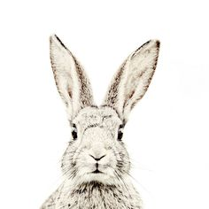 Printed Vinyl Bunny Wallpaper With Magnetic Surface - SmallThe Block Shop - Channel 9