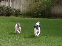 Playing Fetch in the back yard!