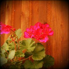 Kukkia ilmassa - taino, seinässä.
