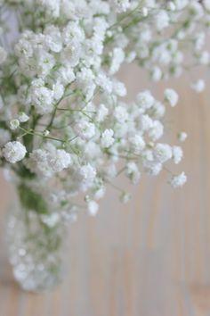 la mariee aux pieds nus Gypsophile ça ressemble a des mini flocon de neige mais en fleur, autrement dit... j'en veux ^^